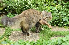 Cute kitten hold the leaf. Cute tabby kitten hold the leaf Royalty Free Stock Photography