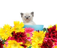 Cute kitten iand flowers Stock Image