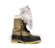 Cute kitten inside of boot Stock Images
