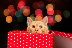 Cute kitten inside gift box Stock Images