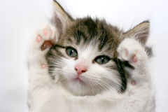 Cute kitten isolated Royalty Free Stock Photography