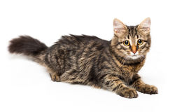 Cute kitten with isolated on white Stock Images