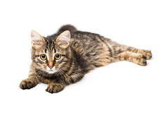 Cute kitten with isolated on white Royalty Free Stock Photos