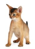 Cute kitten isolated on white background Royalty Free Stock Photo