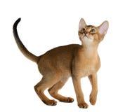 Cute kitten isolated on white background Stock Photos
