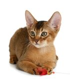 Cute kitten isolated on white background Royalty Free Stock Image