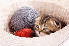 Cute kitten and knitting ravels. In basket Stock Image