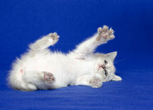 Cute kitten laying down Stock Photography