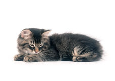 Cute kitten laying down on white background Stock Photo