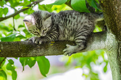 A cute kitten learns to take the first independent steps Stock Photos