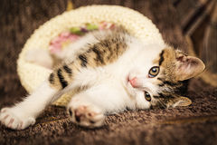 Cute kitten lies in a hat. In a home environment Royalty Free Stock Photo