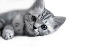 Cute kitten lies Stock Image