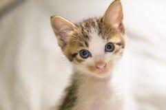 Cute kitten. Litter cat playing Stock Photos