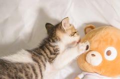 Cute kitten Royalty Free Stock Image