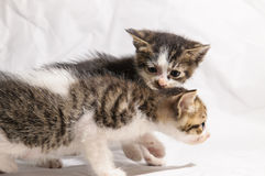 Cute kitten. Litter cat playing Royalty Free Stock Photo