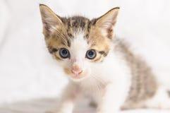 Cute kitten Stock Photography