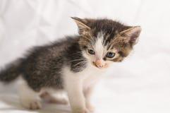 Cute kitten. Litter cat playing Royalty Free Stock Image
