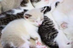 Cute kitten little baby cat is sleeping. On the floor Royalty Free Stock Image