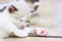 Cute kitten little baby cat is sleeping. On the floor Stock Photos