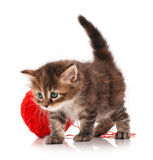 Cute kitten Royalty Free Stock Image