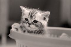 Cute kitten. Cute little kitten in a basket, close-up portrait stock photography