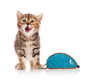 Cute kitten. Cute little kitten with decorative toy mouse over white background Stock Photo