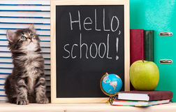 Cute kitten. Cute little kitten with school accessories is ready to go to school royalty free stock photo
