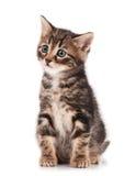 Cute kitten Royalty Free Stock Photo