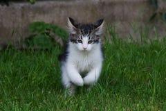 Cute kitten Stock Images