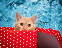 Cute kitten look out of the red gift box Stock Photo