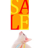 Cute Kitten Looking At Sale Sign Stock Images
