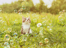 Cute kitten looking at soap bubbles Stock Photo