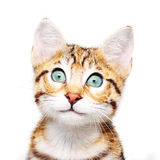 Cute kitten looking up. Royalty Free Stock Image
