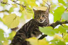 Cute kitten looks anxious from a limetree Royalty Free Stock Image