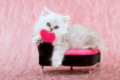 Cute kitten with love heart stock photos