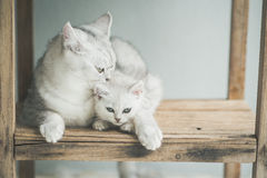 Cute kitten lying Royalty Free Stock Photos