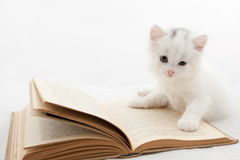 Cute kitten lying on old book. On white background Stock Photos