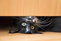 Cute kitten lying under drawer of wardrobe. Cute black-white kitten lying under a drawer of an wardrobe Royalty Free Stock Images
