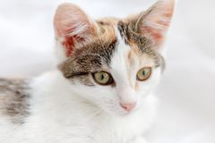 Cute kitten lying on windowsill on a bright white tulle.  Stock Images