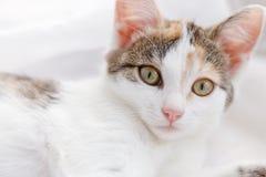 Cute kitten lying on windowsill on a bright white tulle.  Stock Photos