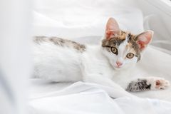 Cute kitten lying on windowsill on a bright white tulle.  Stock Photography
