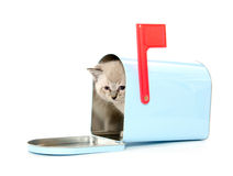 Cute kitten in a mailbox Royalty Free Stock Photography