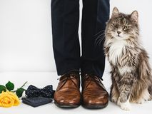 Cute kitten and man`s legs royalty free stock photos