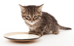 Cute kitten with milk mustache Royalty Free Stock Images