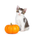 Cute kitten with mini pumpkin on white. Royalty Free Stock Photography