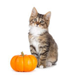 Cute kitten with mini pumpkin on white. Royalty Free Stock Photos