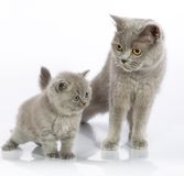 Cute kitten with mother Stock Photos