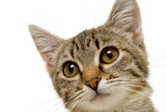Cute kitten. Stock Photography