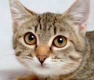 Cute kitten. Royalty Free Stock Photo