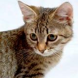 Cute kitten. Royalty Free Stock Photography